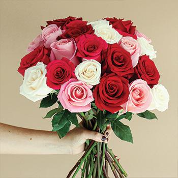 rosas lindas - ROSAS | 10 DICAS de como CULTIVAR
