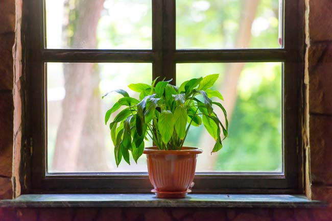 luz indireta - LUZ INDIRETA BRILHANTE - Qual EFEITO para as plantas?