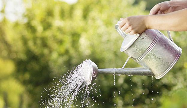 regando - CRESCIMENTO DAS PLANTAS: Qual importância da ÁGUA?