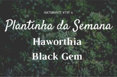 Novo VÍDEO: Plantinha da Semana – HAWORTHIA BLACK GEM
