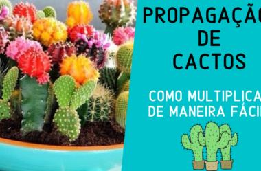 Novo VÍDEO: Propagação de CACTOS | Como MULTIPLICAR de Maneira FÁCIL!