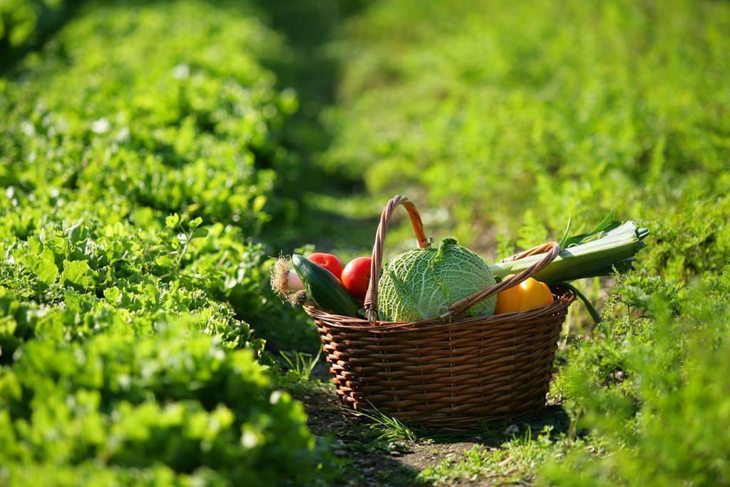 legumes - JARDIM DE INVERNO - 5 PASSOS para FAZER o seu