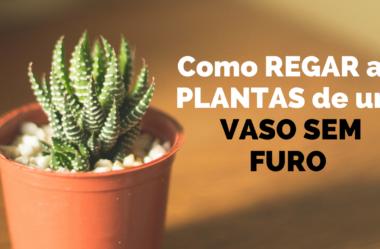 Novo Vídeo: Como REGAR as PLANTAS de um VASO SEM FURO
