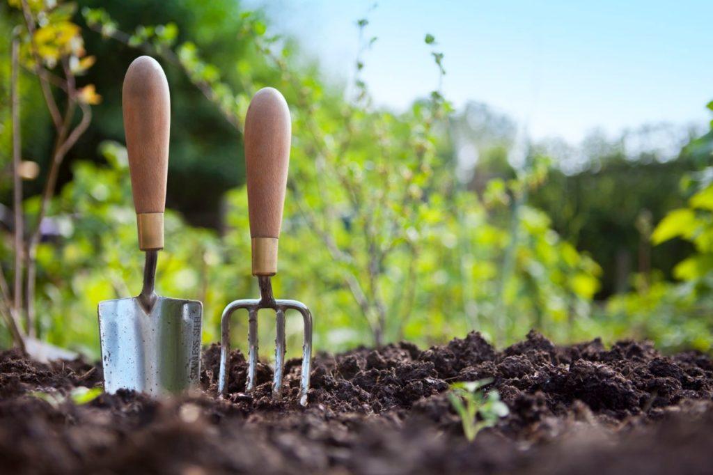 erros na jardinagem 2 1024x682 - 7 Maiores ERROS NA JARDINAGEM que você Não percebe que comete