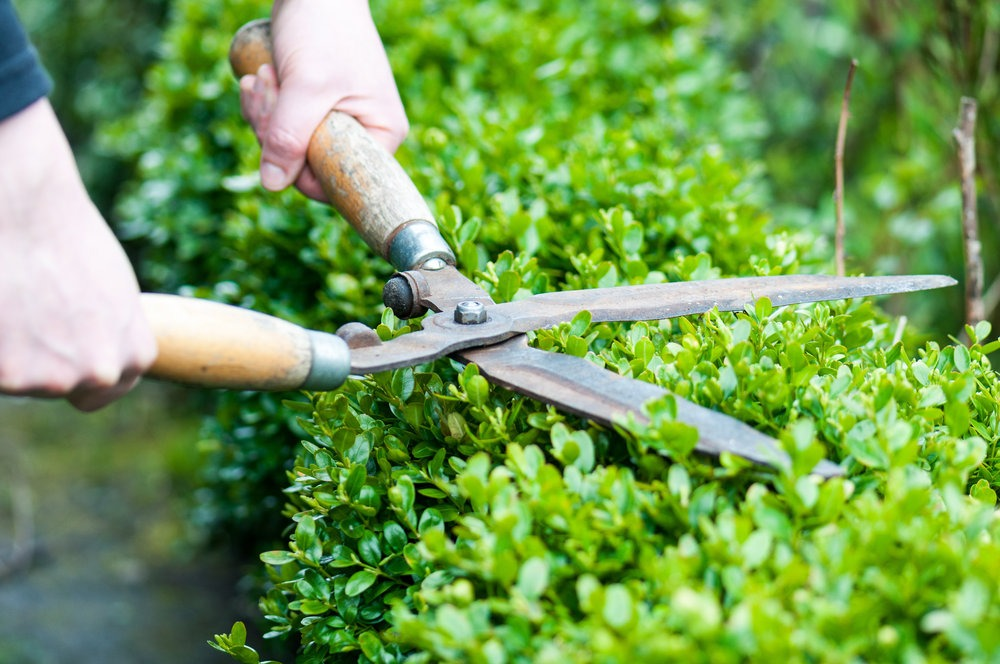 erros na jardinagem 8 1 - 7 Maiores ERROS NA JARDINAGEM que você Não percebe que comete
