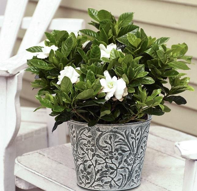 gardenia 2 - PLANTAS PARA BANHEIRO | Conheça 10 Tipos para Usar