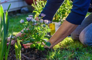 9 TIPOS DE PLANTAS que todo Jardim precisa ter