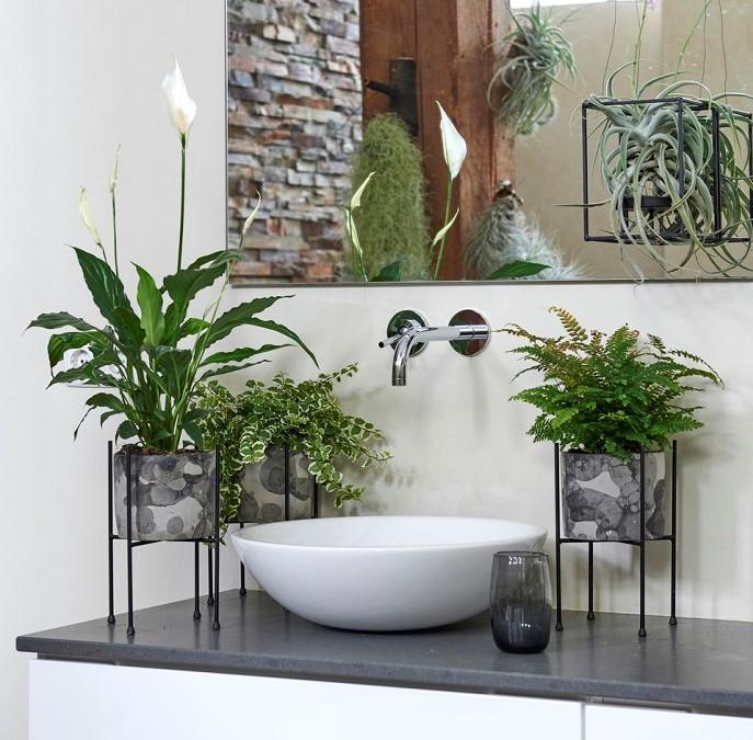 plantas para banheiro - PLANTAS PARA BANHEIRO | Conheça 10 Tipos para Usar