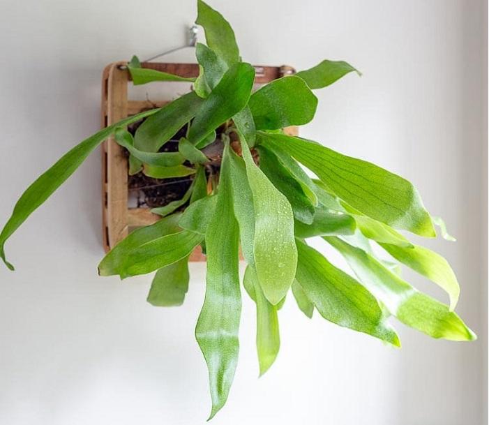 staghorn fern - PLANTAS PARA BANHEIRO | Conheça 10 Tipos para Usar