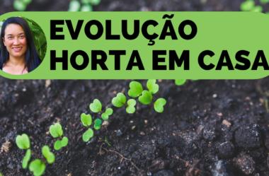 Novo Vídeo: EVOLUÇÃO HORTA EM CASA 🌱 As MUDAS e SEMENTES estão LINDAS!