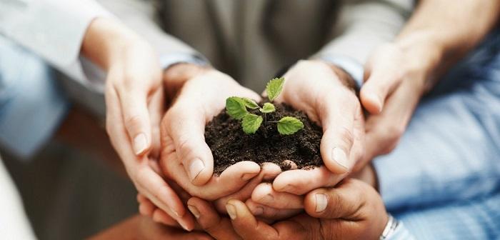 cuidados com as plantas 1 - PLANTAS DE INTERIOR: As Melhores DICAS para Cultivá-las