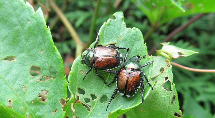 insetos - PLANTAS DE INTERIOR: As Melhores DICAS para Cultivá-las