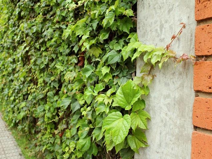 jardim vertical trepadeira 1 - JARDINS VERTICAIS : 12 DICAS Úteis de Design