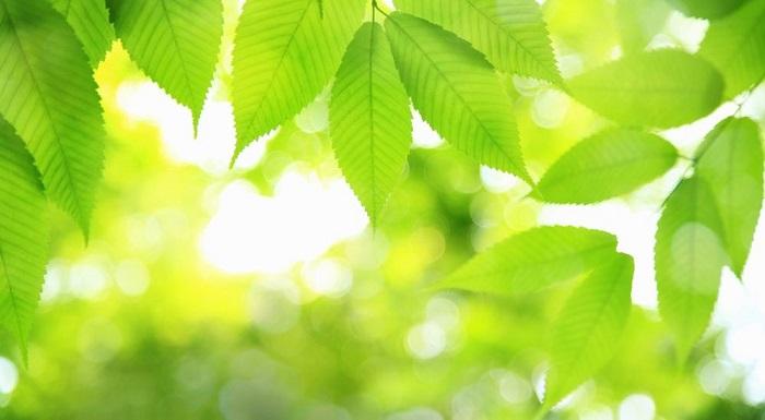 luminosidade 1 - PLANTAS DE INTERIOR: As Melhores DICAS para Cultivá-las