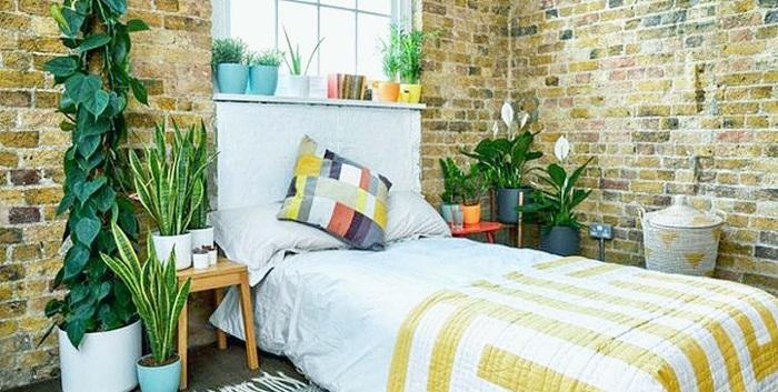 plantas no quarto 1 - PLANTAS NO QUARTO, Pode Ter? Descubra Tudo