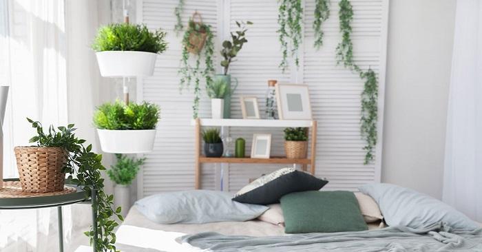 plantas no quarto - PLANTAS NO QUARTO, Pode Ter? Descubra Tudo