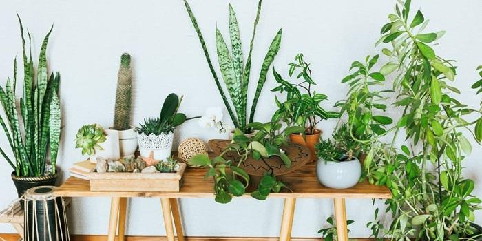 plantas para interior 2 1 - PLANTAS DE INTERIOR: As Melhores DICAS para Cultivá-las