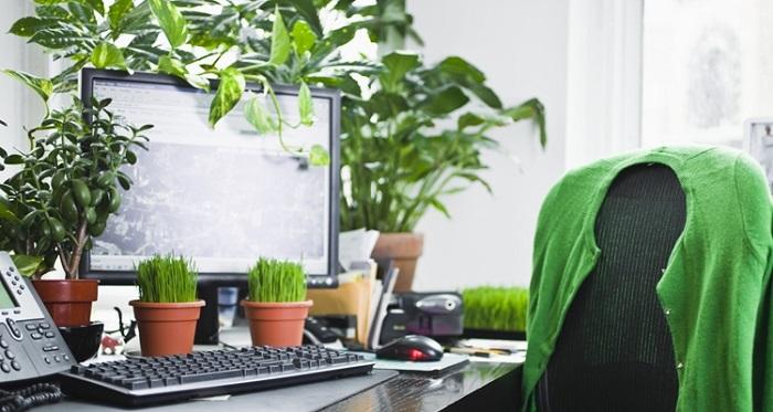 plantas para interior 2 3 - PLANTAS DE INTERIOR: As Melhores DICAS para Cultivá-las
