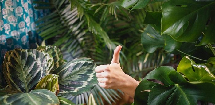 plantas para interior 8 1 - PLANTAS DE INTERIOR: As Melhores DICAS para Cultivá-las