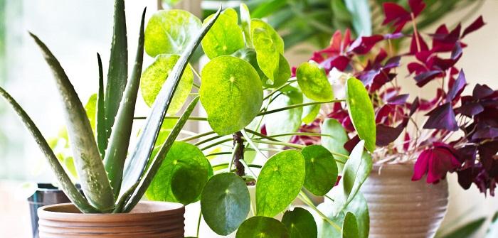 plantas para interior4 1 - PLANTAS DE INTERIOR: As Melhores DICAS para Cultivá-las