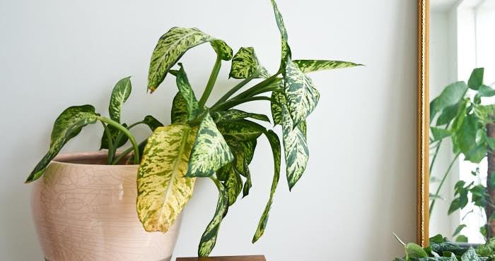 plantas para interior5 - PLANTAS DE INTERIOR: As Melhores DICAS para Cultivá-las