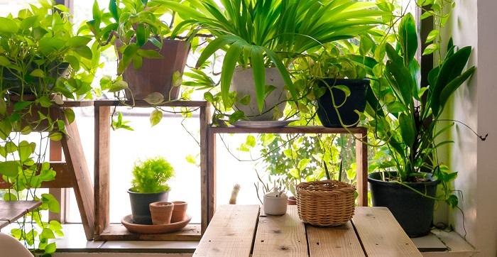plants no quarto2 - PLANTAS NO QUARTO, Pode Ter? Descubra Tudo