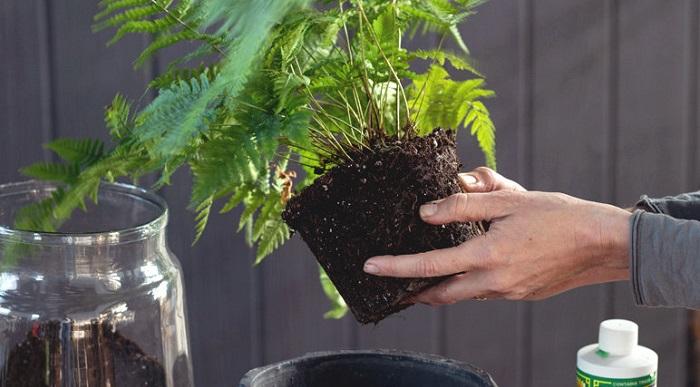 raizes 1 - PLANTAS DE INTERIOR: As Melhores DICAS para Cultivá-las