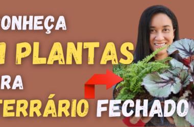 Novo Vídeo: Conheça 11 PLANTAS de TERRÁRIO Fechado! Se Prepare pra MONTAR o SEU!