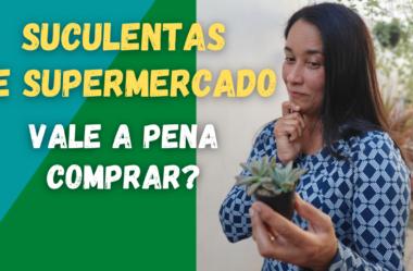 Novo Vídeo: SUCULENTAS DE SUPERMERCADO: VALE A PENA COMPRAR?