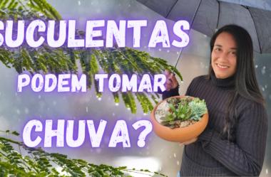 Novo Vídeo: SUCULENTAS PODEM TOMAR CHUVA? DESCUBRA SE FAZ MAL PARA SUAS SUCULENTAS E CACTOS!