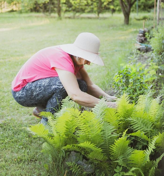 como fazer um jardim 12 - COMO FAZER UM JARDIM Começando do Zero! 10 Passos para Iniciantes