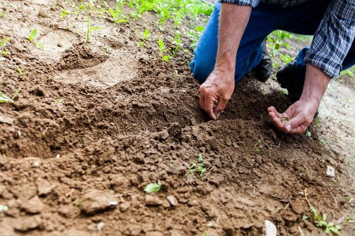 como fazer um jardim 2 1 - COMO FAZER UM JARDIM Começando do Zero! 10 Passos para Iniciantes