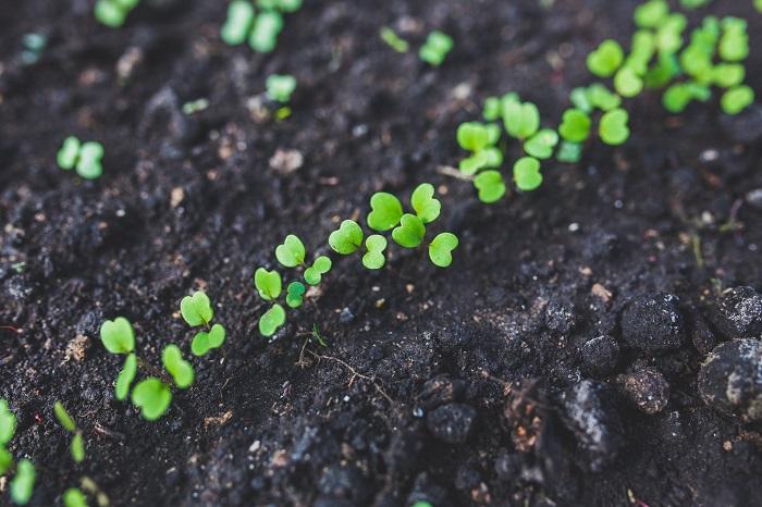 como fazer um jardim 4 - COMO FAZER UM JARDIM Começando do Zero! 10 Passos para Iniciantes