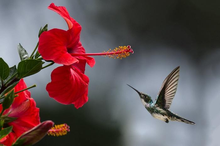 flores - PLANTA NÃO FLORESCE: RESOLVA com estes 3 Segredinhos!