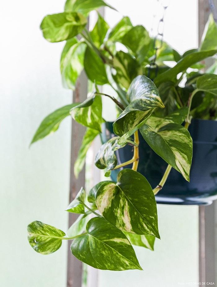 photos 1 - JARDIM VERTICAL: 15 Plantas Pra Sua Parede Verde!