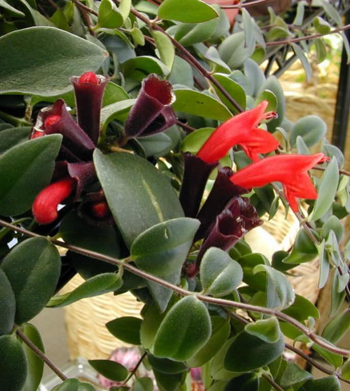 planta batom1 - JARDIM VERTICAL: 15 Plantas Pra Sua Parede Verde!