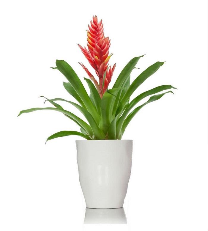 vriesia - JARDIM VERTICAL: 15 Plantas Pra Sua Parede Verde!