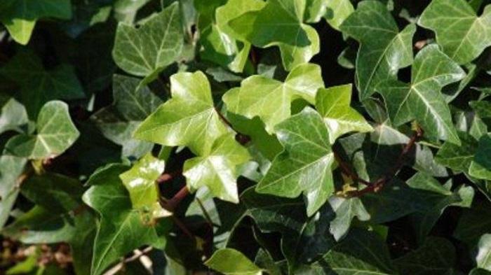 Heras - PLANTAS DE SOMBRA - 15 Plantas para Cultivar em Casa