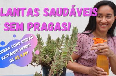 Novo Vídeo: PLANTAS Saudáveis e SEM PRAGAS! Descubra como Cuidar gastando Menos de R$ 4,00! Com Água Oxigenada!
