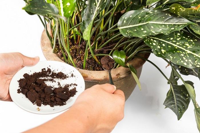 adubando - PLANTAS SAUDÁVEIS | Conheça 9 DICAS Essenciais e Fáceis