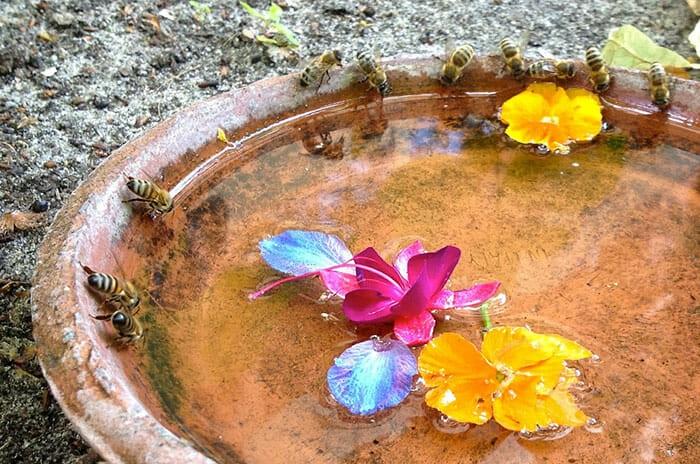 banho para abelhas 3 - POLINIZADORES: UAU! 3 Passos pra atrair ao seu Jardim!
