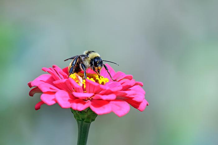 banho para abelhas - POLINIZADORES: UAU! 3 Passos pra atrair ao seu Jardim!