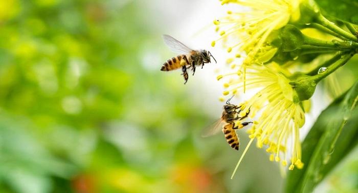banho para abelhas2 - POLINIZADORES: UAU! 3 Passos pra atrair ao seu Jardim!