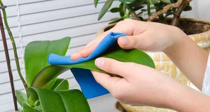 limpando - PLANTAS SAUDÁVEIS | Conheça 9 DICAS Essenciais e Fáceis