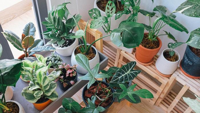 plantas domesticas - PLANTAS SAUDÁVEIS | Conheça 9 DICAS Essenciais e Fáceis
