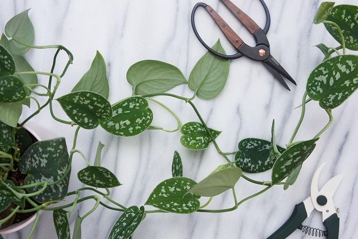 podando - PLANTAS SAUDÁVEIS | Conheça 9 DICAS Essenciais e Fáceis