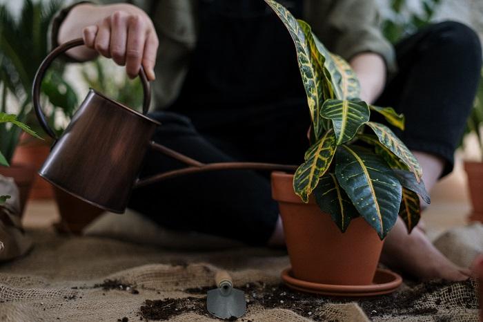 regando - PLANTAS SAUDÁVEIS | Conheça 9 DICAS Essenciais e Fáceis