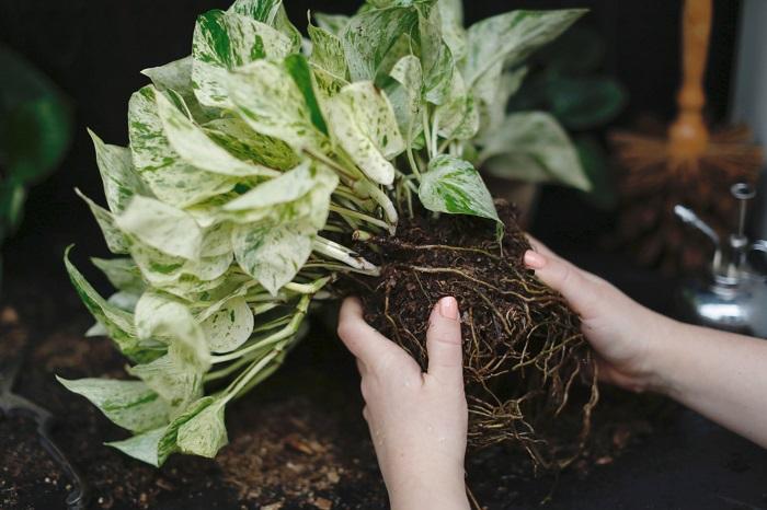 replantando - PLANTAS SAUDÁVEIS | Conheça 9 DICAS Essenciais e Fáceis