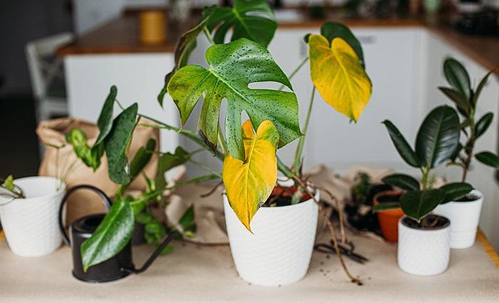 retirando folhas - PLANTAS SAUDÁVEIS | Conheça 9 DICAS Essenciais e Fáceis