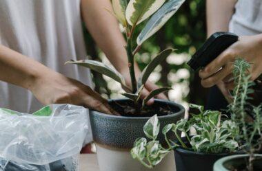 7 PLANTAS DIFÍCEIS de cuidar que valem a pena